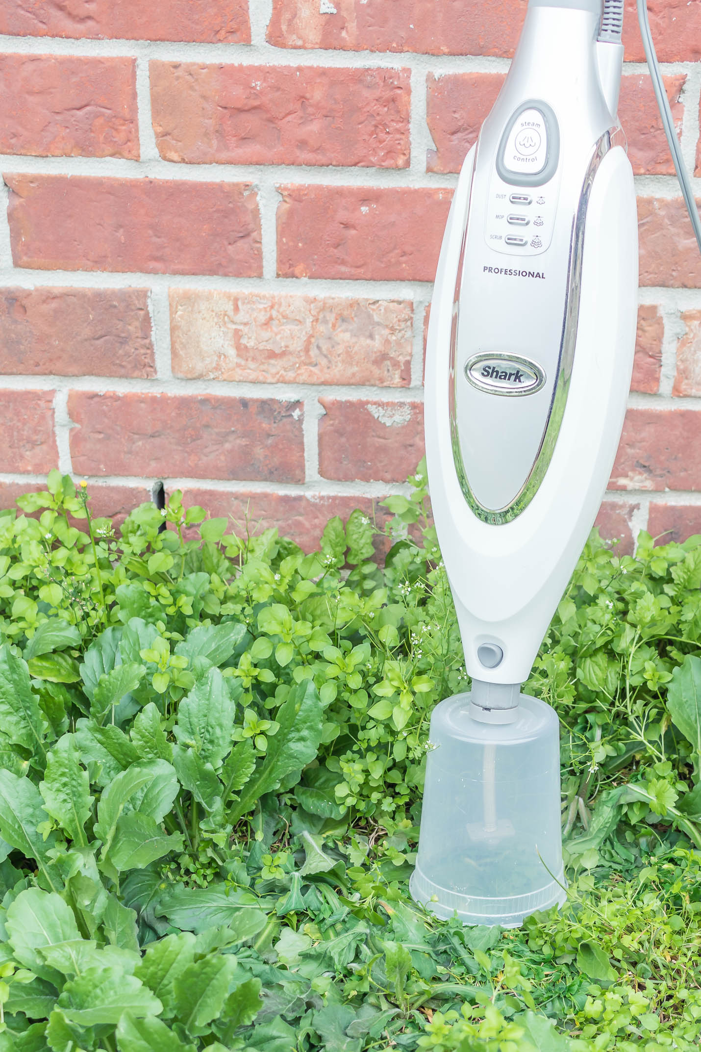 kill weeds with steam
