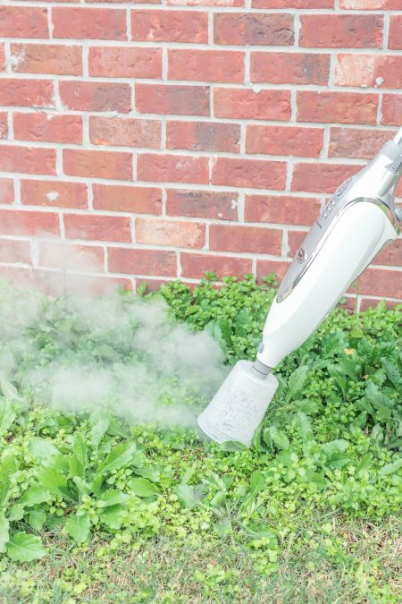 how to kill weeds with steam