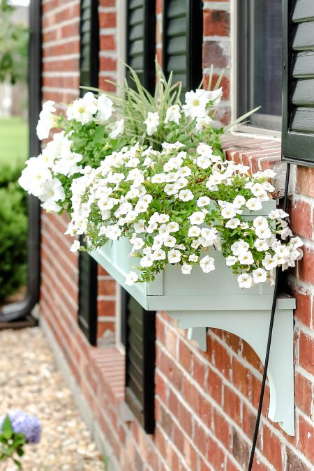 window box with white flowers